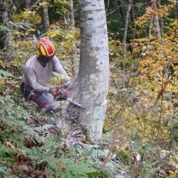 様々な建築家とコラボする 株式会社 飛騨の森でクマは踊る が 木のクリエイティブディレクター 設計 製作 等の正社員を募集中 アーキテクチャーフォト ジョブボード